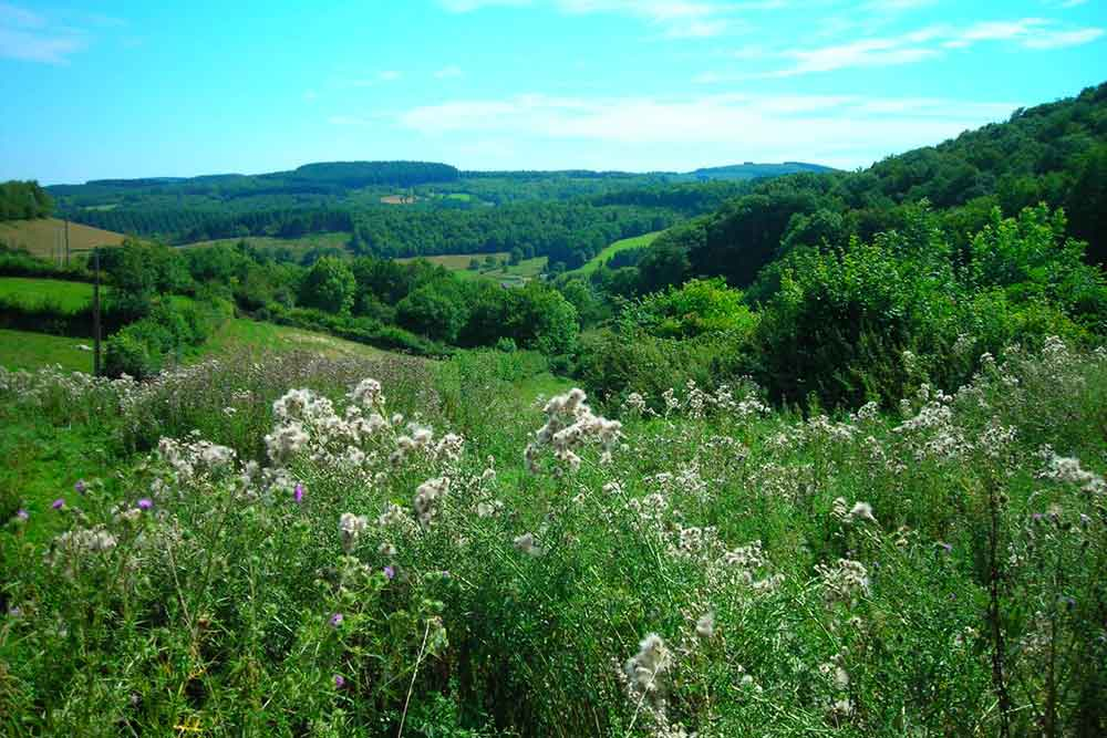 Plantes et colline
