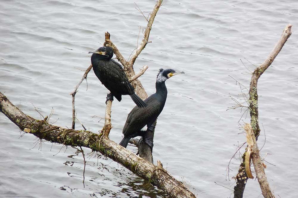 Oiseaux au bord de l'eau