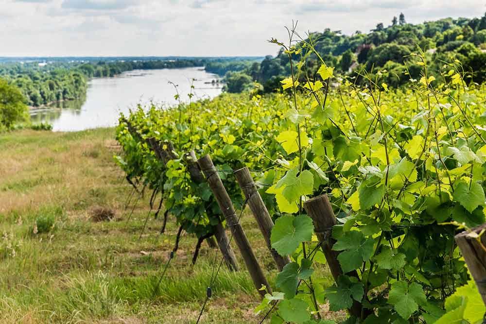 Domaine de La Tourette - vignoble