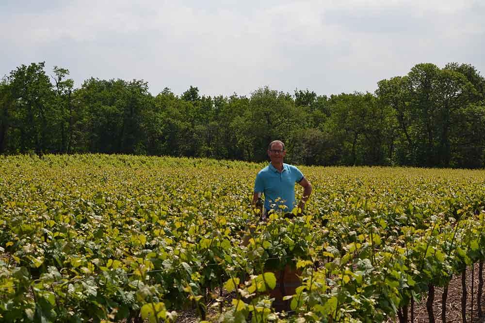 Laurent Freuchet dans les vignes