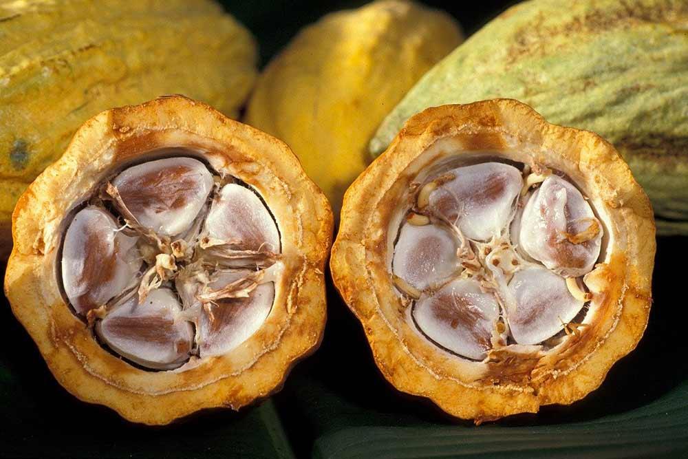 Fève de Cacao ouverte