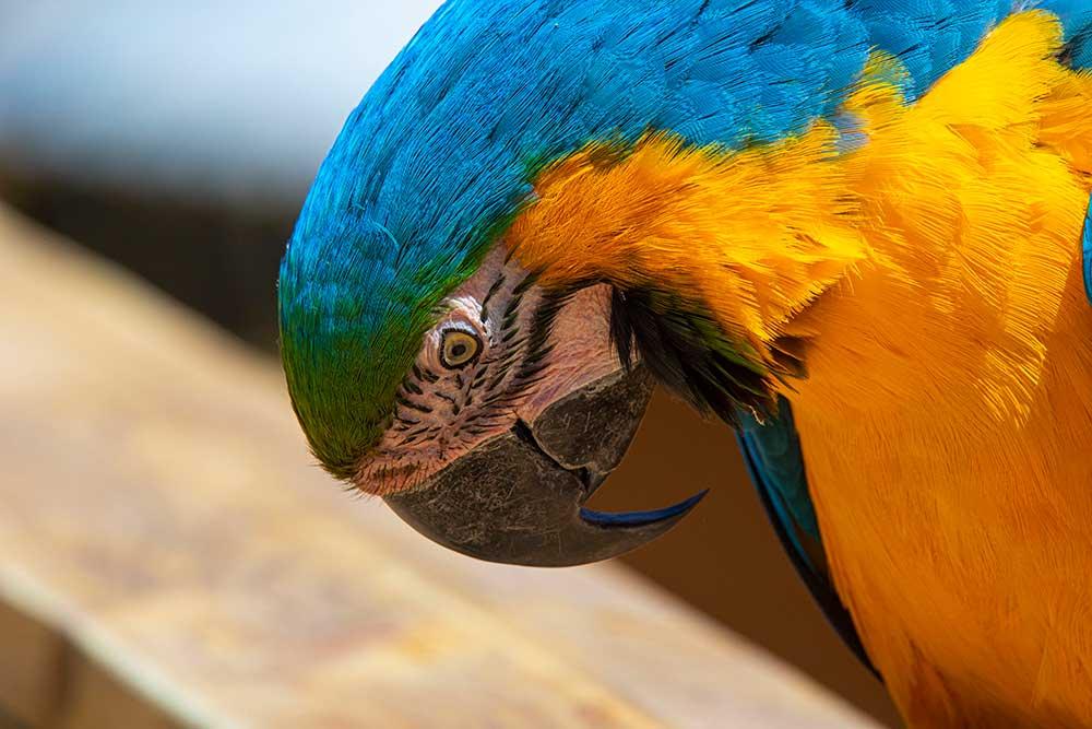 Parrot World - Les aras, magnifiques!