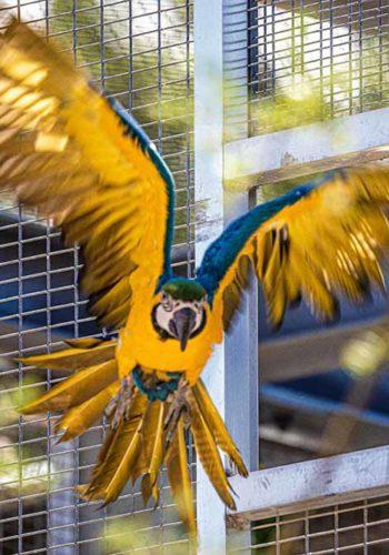 Sous la volière, plus de 350 oiseaux prendront leur envol!