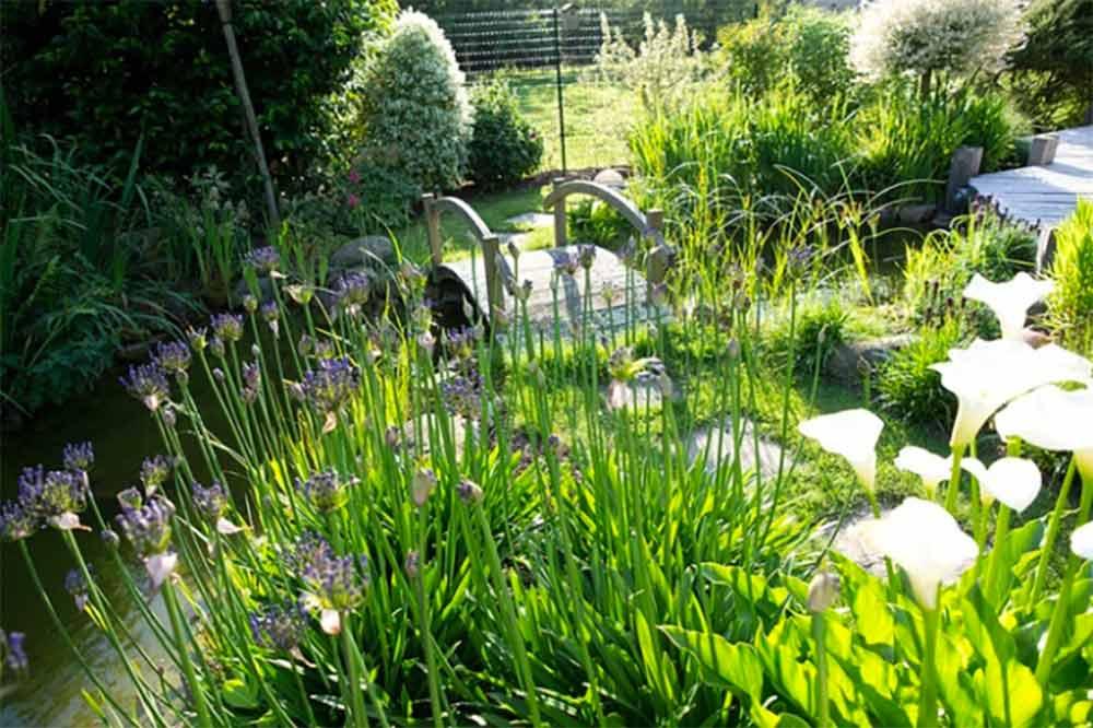 Jardin aquatique - un écrin de verdure