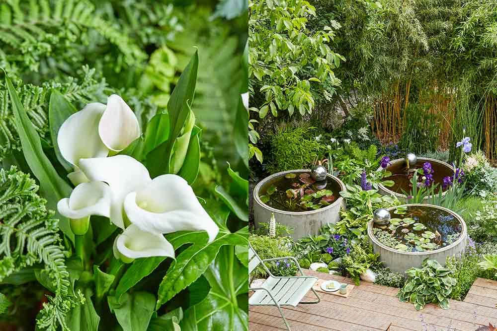 De la fraîcheur dans votre jardin