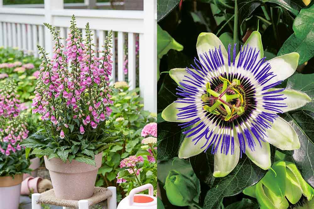 Fleurs pour votre jardin
