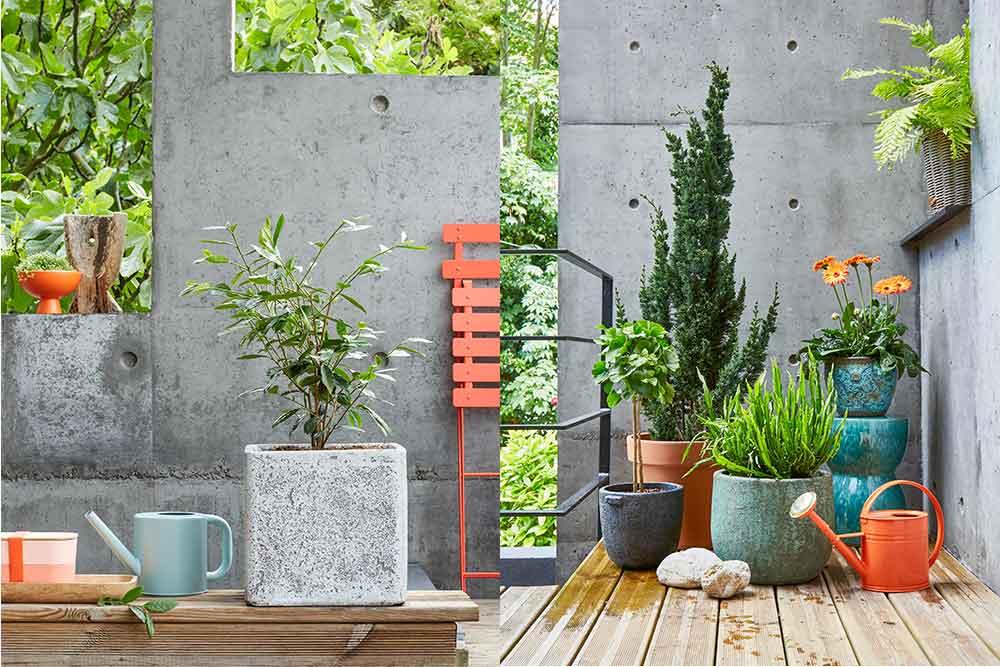 De la couleur pour mettre de la gaîté dans votre jardin