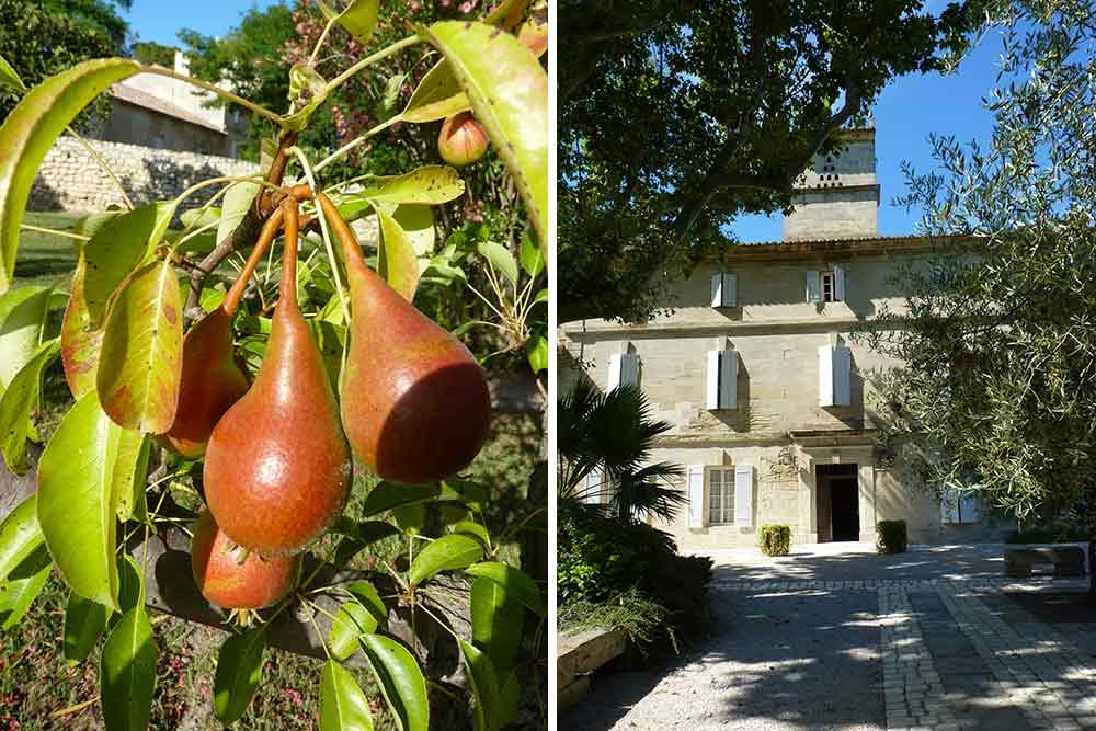 Fruits et façade du Petit Mylord