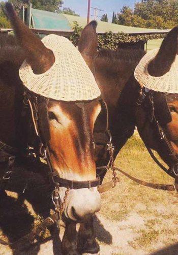 Chapeaux pour mules