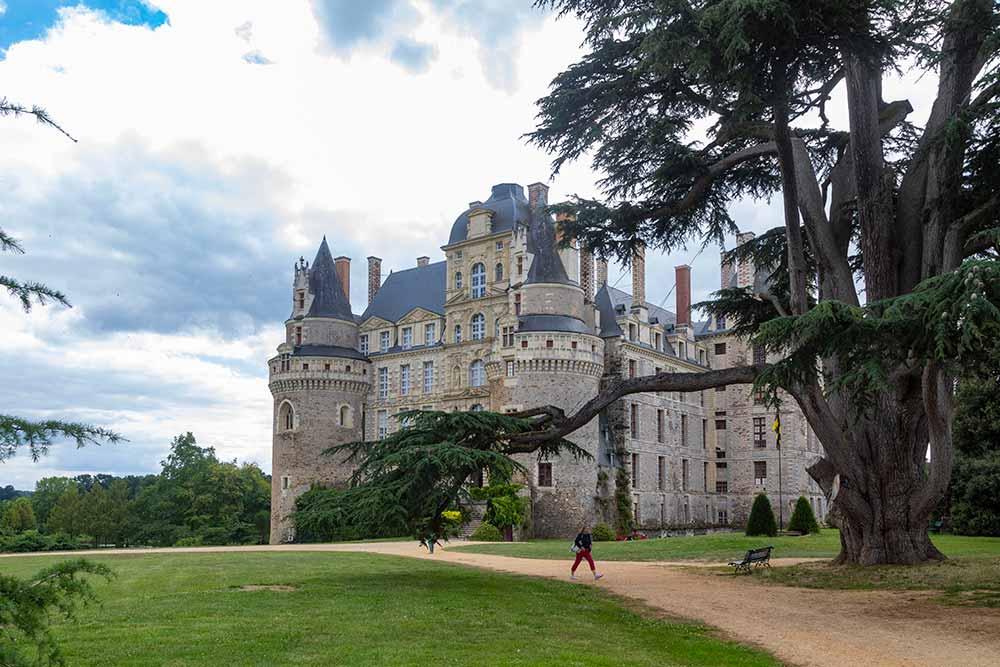 Dès l'entrée il faut passer sous un arbre plus que centenaire pour accéder au château.