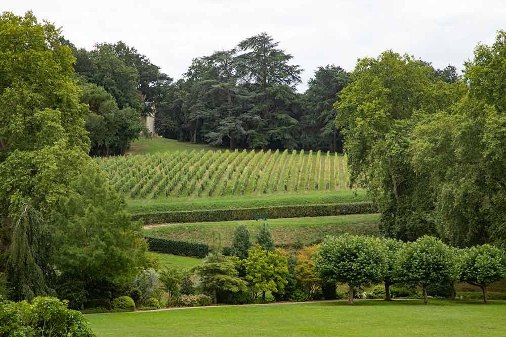 Dans le parc du château, 28 hectares de vignes.