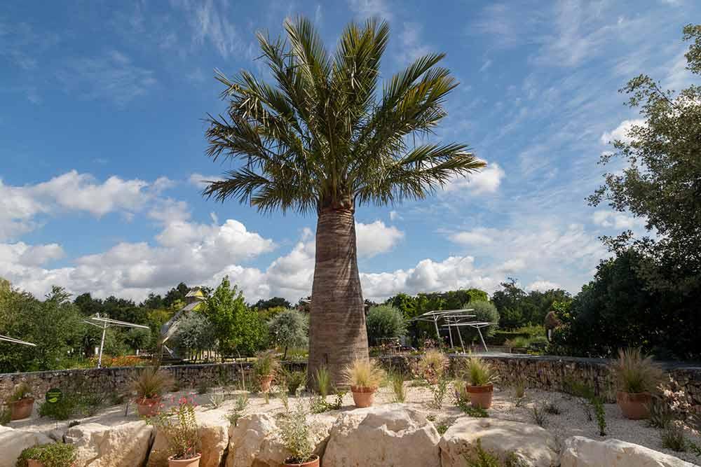 Anjou - Le jardin sans eau, un espace végétal nouvelle génération.