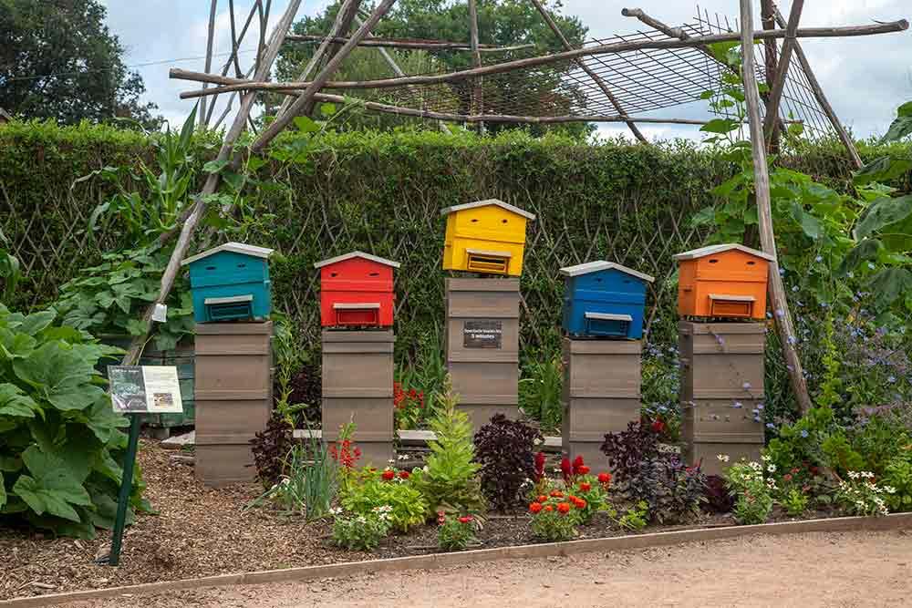 Les ruches chantent…