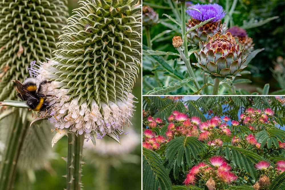 Des insectes, des couleurs, des fleurs extraordinaires.