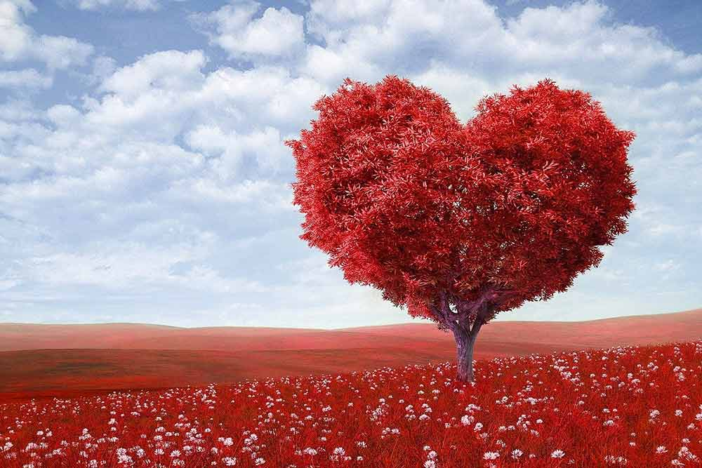 Vive l'amour et la couleur rouge