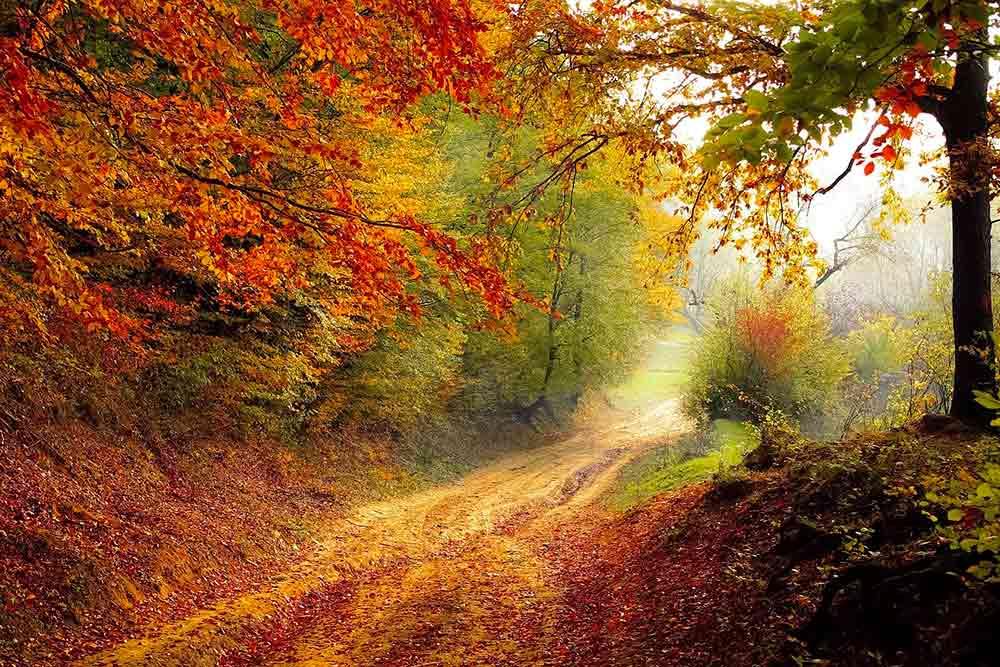 La nature est si belle, ne la laissons pas mourir.