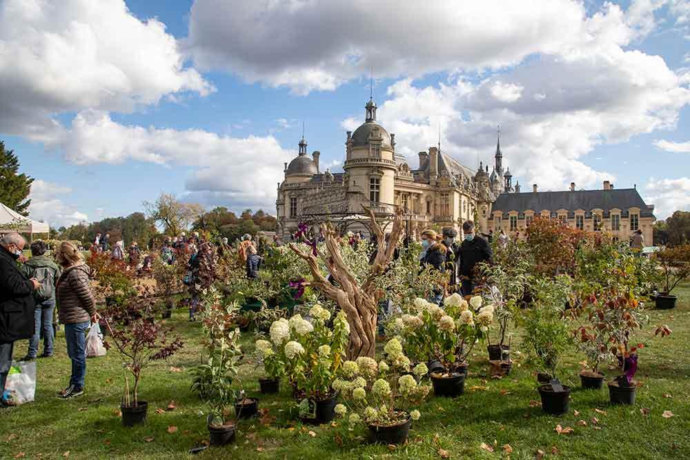 Jardin - les plantes sont à l'honneur dans les jardins du Château de Chantilly