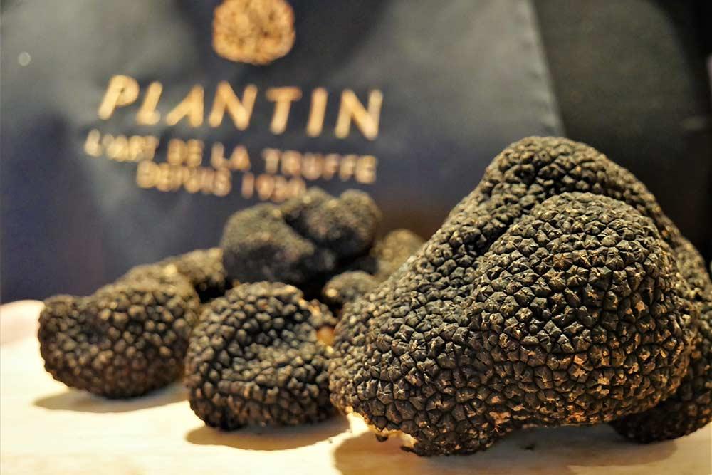 La Truffe selon Plantin