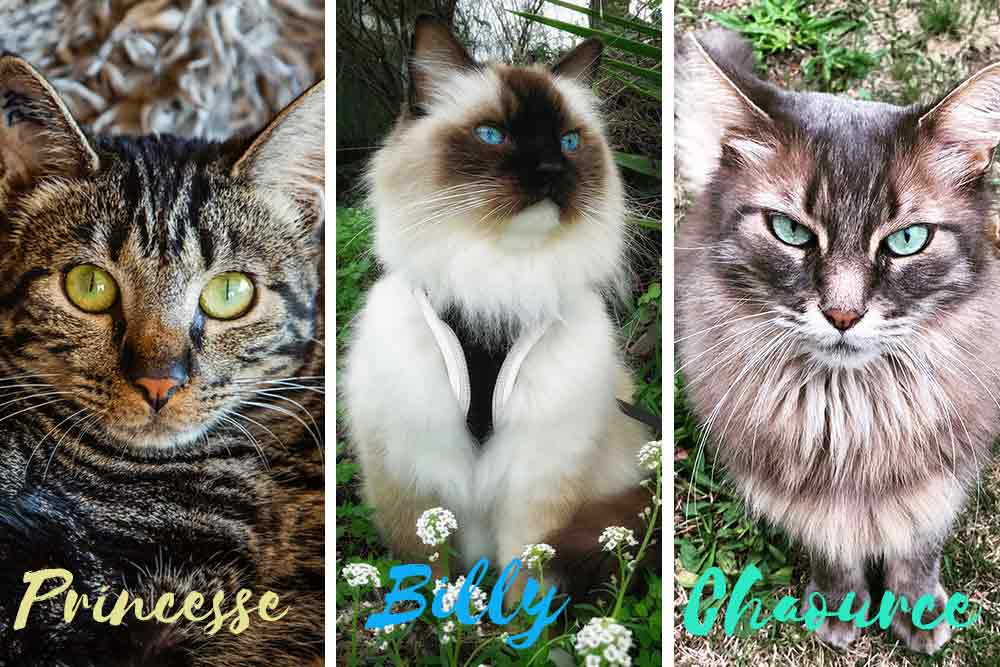 J'ai appelé mes potes les chats pour leur raconter la grotte… Princesse, Billy (photo de Chantal-Alice Cecchetti) et Chaource en veulent une aussi!
