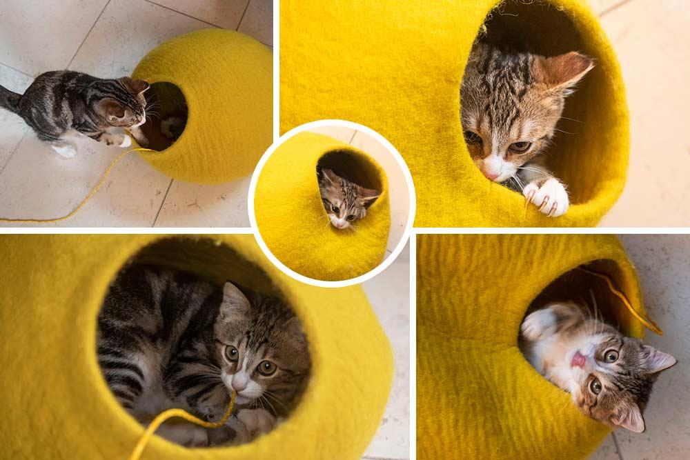 Grotte - à chat