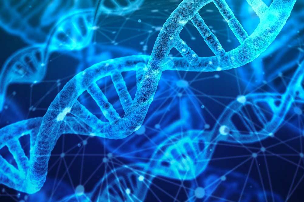 ADN Génétique