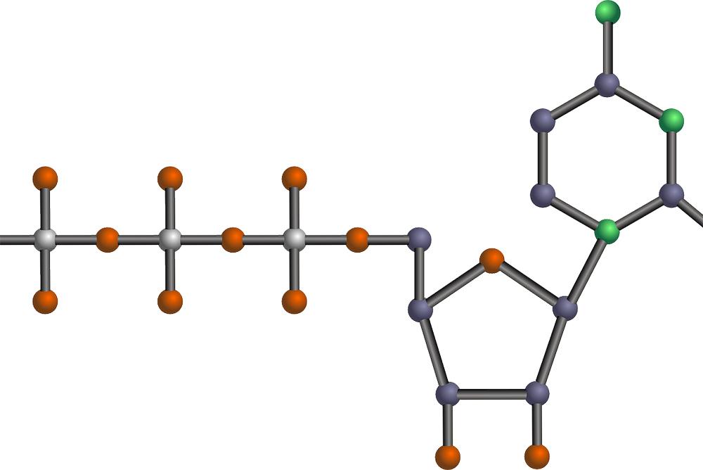 ADN Nucléotide