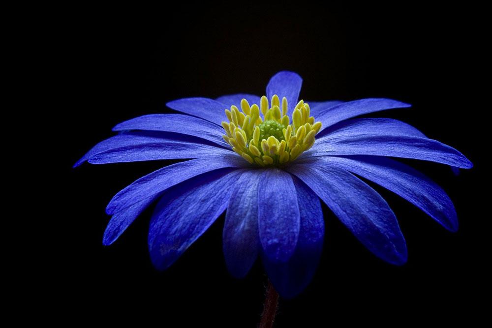 Une belle fleur bleue