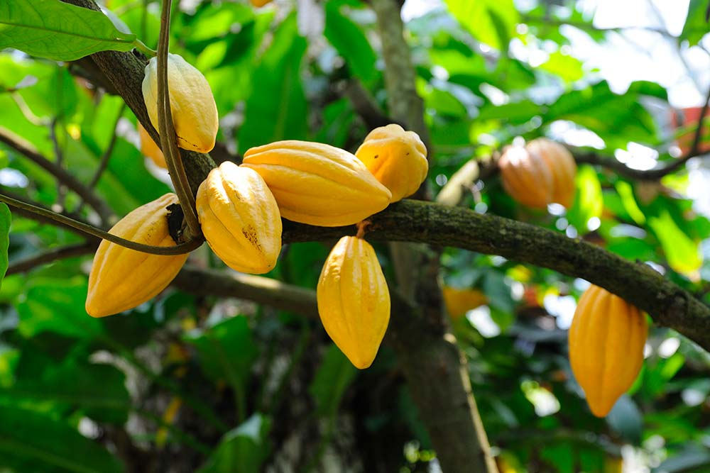 Fruits exotiques de Madagascar