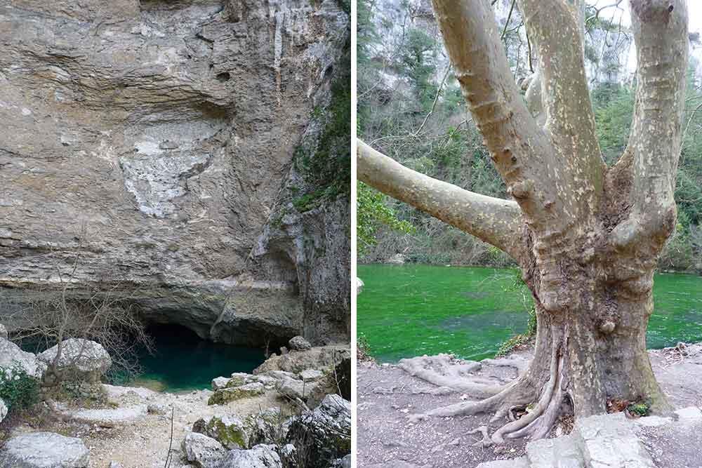 La Fontaine en période sèche et, à droite, vieux platane au bord de la Sorgue