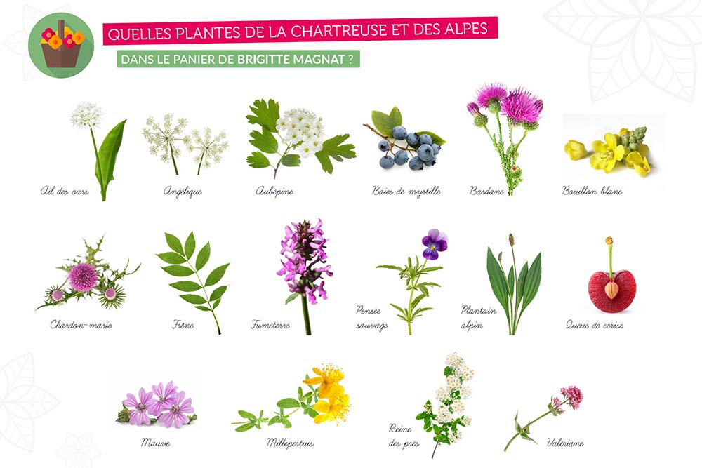 Douceur Cerise - des plantes sauvages de super qualité