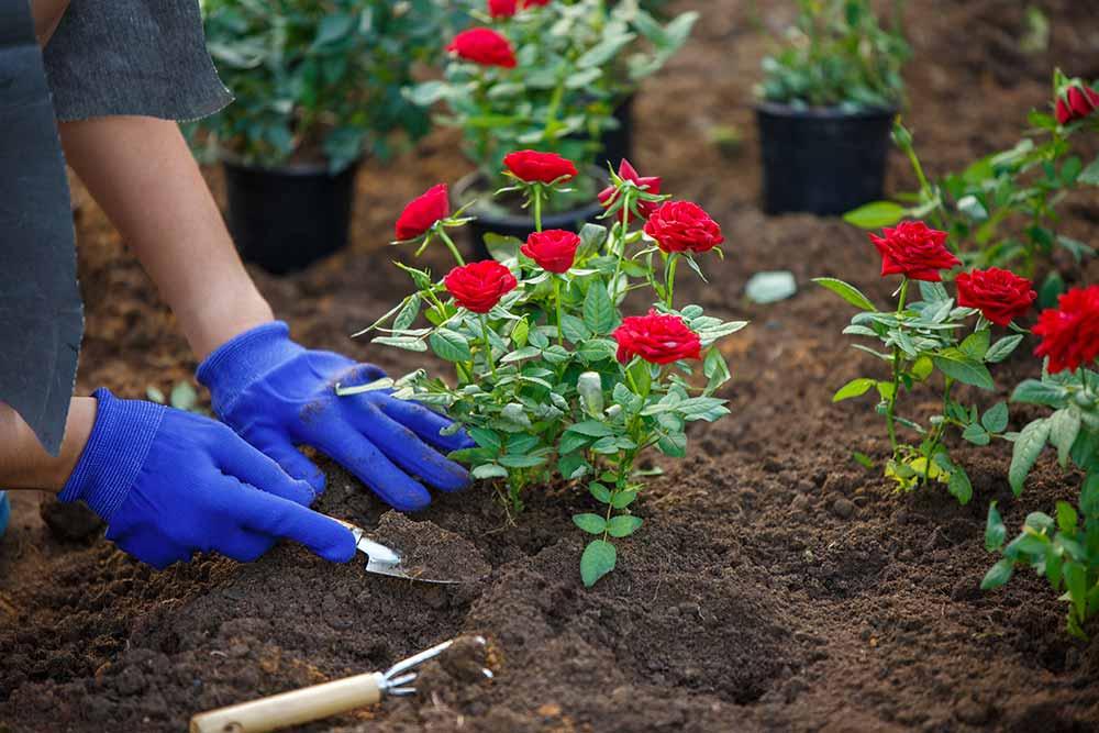 Solabiol - des terreaux pour les plantes