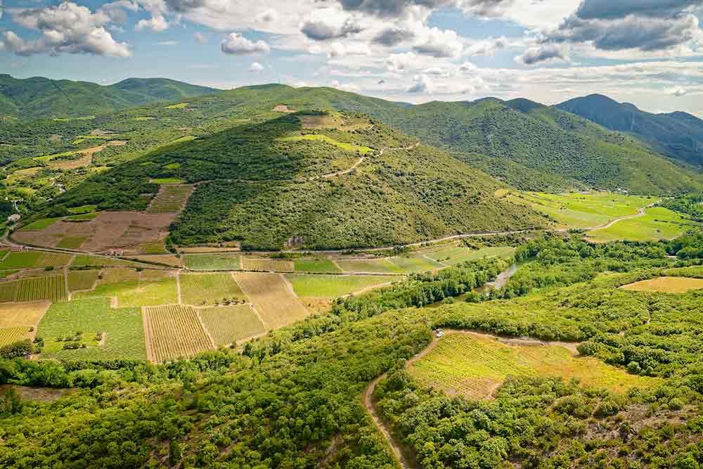 Les vignes de la Cave de Roquebrun