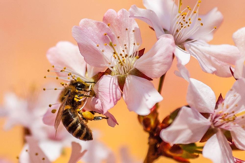 Pollen - un allié de choix pour la beauté de vos cheveux