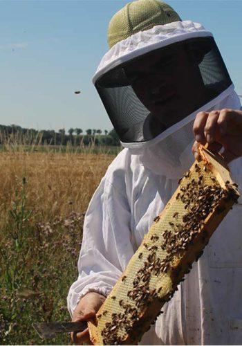NATURACTIVE - Récolte miel d'Hélichryse