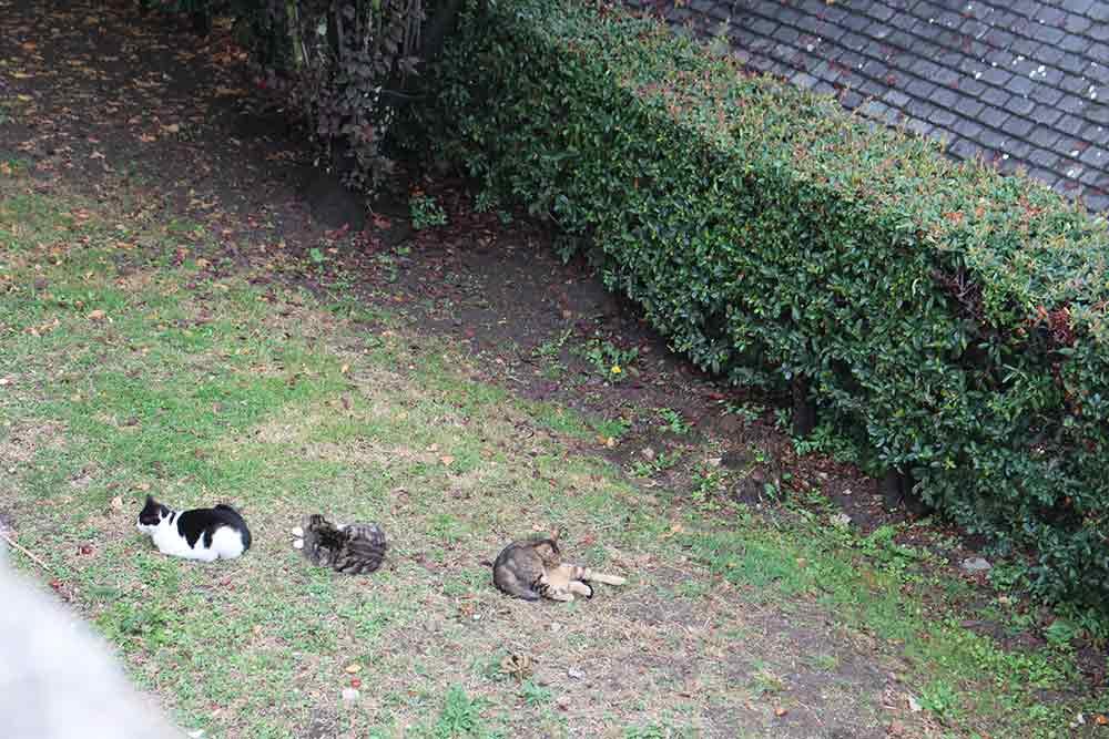 Les chats sont les bienvenus dans les jardins du Mont