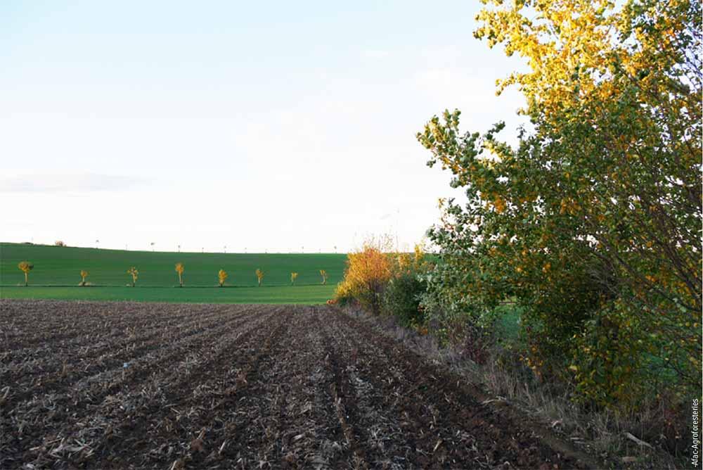 Des champs pour cultiver les Tournesols