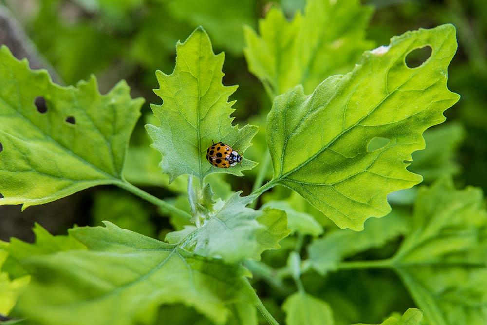 Un magnifique vignoble où les insectes et les fleurs peuvent s'épanouir