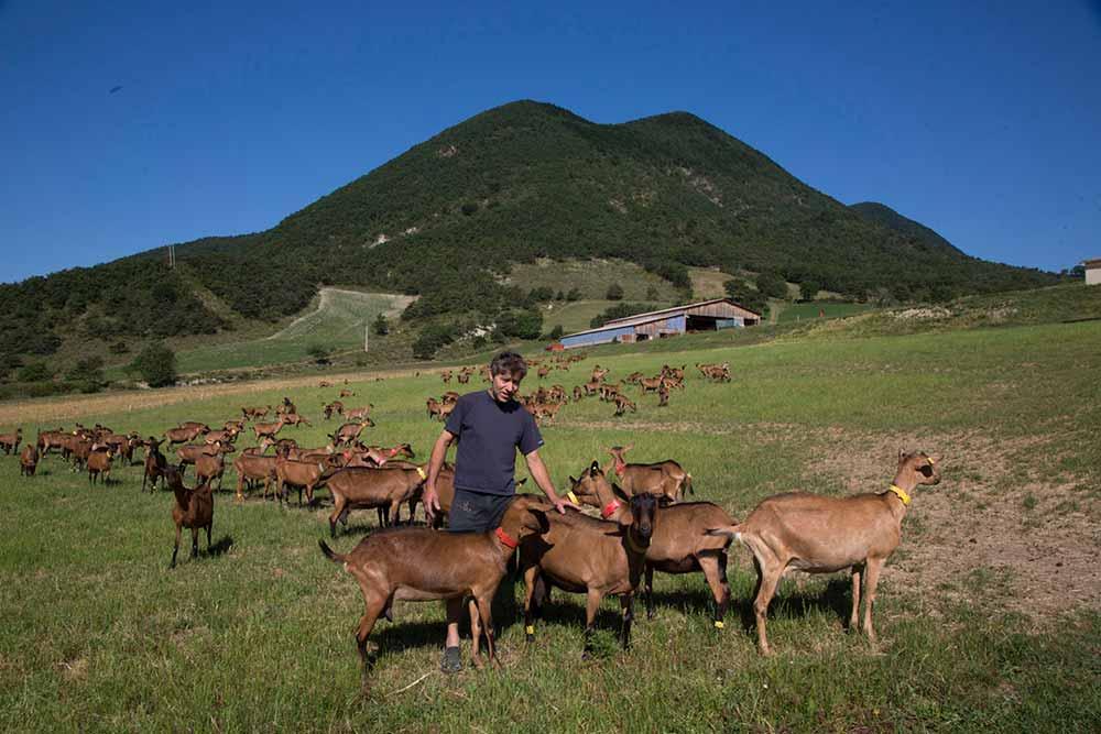 A La Ferme du Pracoutel, les chèvres vivent en liberté et peuvent se nourrir de la bonne herbe des champs