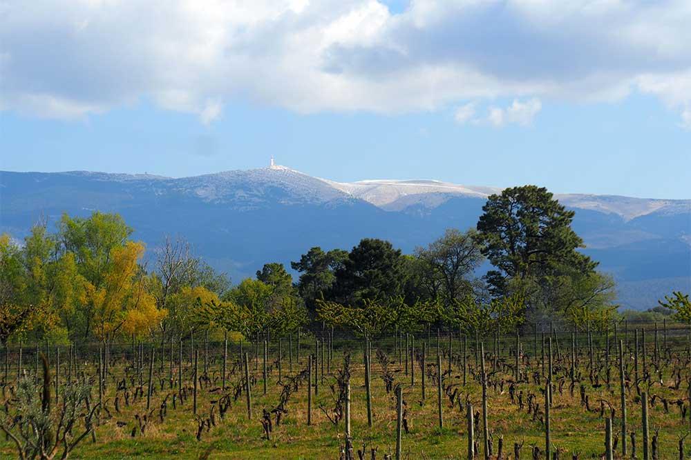 Domaine Les Chancel - une culture Bio au coeur du Mont Ventoux